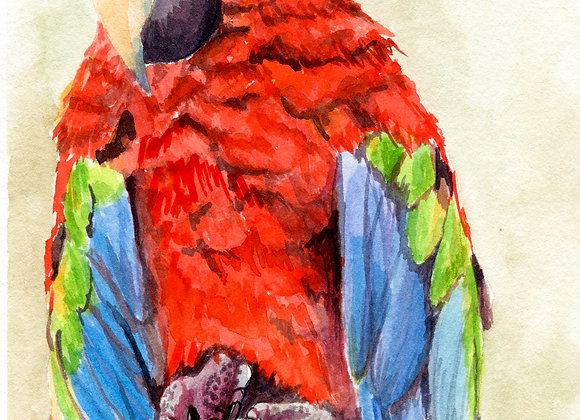 Macaw, 8x10 limited print