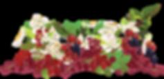 Laneberg-maximilian fruit.png