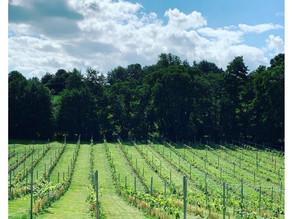 English Vineyard Guide | English Wine Week 2021