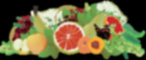 Laneberg-bacchus fruit.png