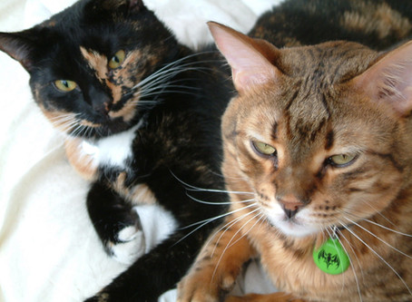 Encounters of the Furred Kind - My Love Affair With Cats (and all creatures great & small)