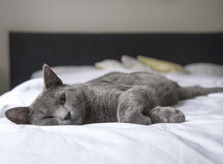 Why Your Cat Exercising Is the Purr-fect New Year's Resolution