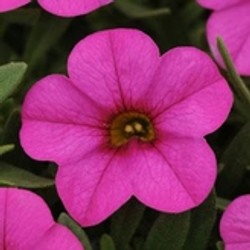 164_pink