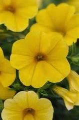 158_yellow