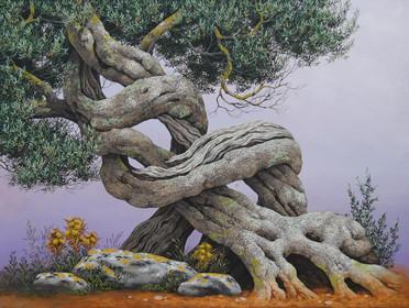 Biaghio Magliani - Ulivo