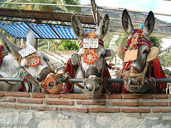 Mijas Village - the burro taxi