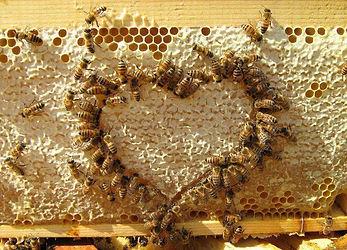 Cadre miel coeur