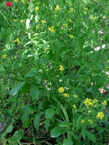 חטוטרן פרט צעיר פרחים ונוף.JPG