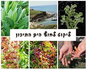 עשבים שטים: ליקוט צמחי מאכל לחוף הים התיכון |  סיור עומק למבוגרים