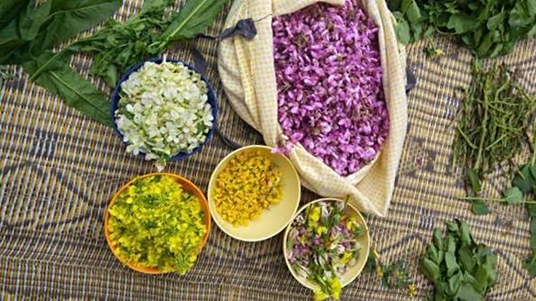פרחי בר למאכל