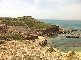 """ליקוט צמחי חוף ים - חלק ב: """"שוּמר הים"""""""