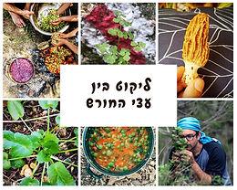 בין עצי החורש: ליקוט צמחי מאכל בחורש הים תיכוני    סיור עומק למבוגרים