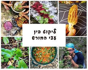בין עצי החורש: ליקוט צמחי מאכל בחורש הים תיכוני |  סיור עומק למבוגרים