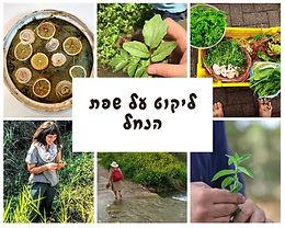 על שפת הנחל: צמחי בר למאכל המאפיינים בתי גידול לחים    מיני קורס בימי שישי