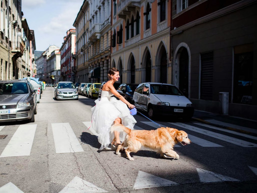 Gli animali, i fedeli amici nuovi protagonisti al matrimonio