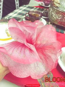 pink flowe