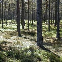 Bödaskogen