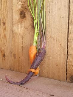 ירקות עושים באהבה