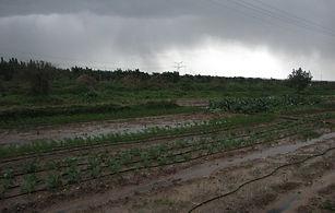 אחסון ירקות אורגניים