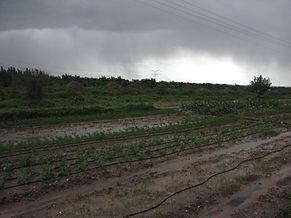 שדה אורגני מוצף