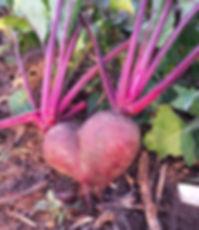 ירקות באהבה, סלק
