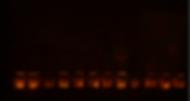 Tradtional luminarias.png