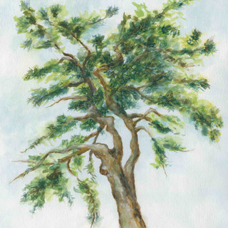 Watercolor tree stitched.jpg