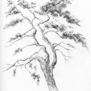 pine tree 8bit+tone.jpg