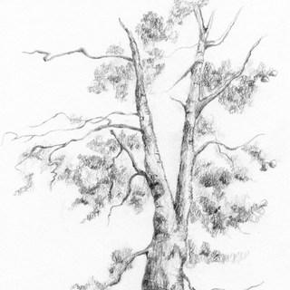 pine tree 2 8bit+tone.jpg