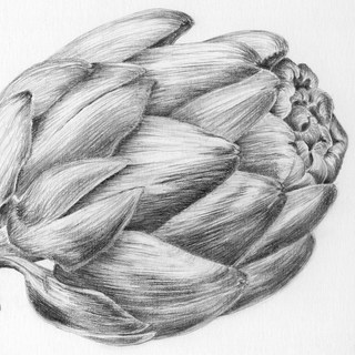 artichoke scan+tone.jpg