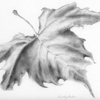 graphite leaf scan no adj copy.jpg