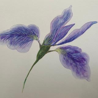 Iris gouache.jpeg