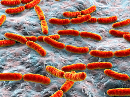 Are dead bugs good for our gut?