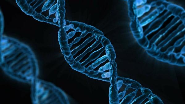 Genes, Genetics, DNA