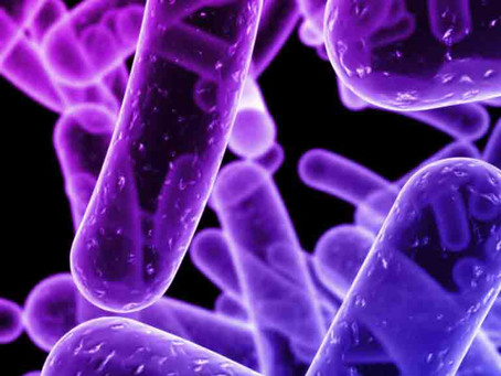 Know your Gut up close and personal -Part 3: Bacteroidetes
