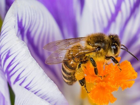 Bacteria Increases Pollen Protein Digestibility
