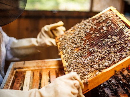 Feeding Bees in the Fall - Tips from a Master Beekeeper