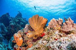 scuba-diving-in-cozumel.jpg
