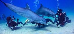 Dolphin-Dive-2-498x232.jpg