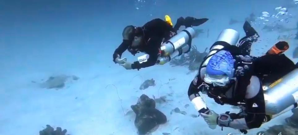Mergulho Descompressivo | Bonaire | Diving College