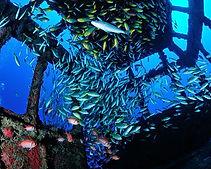 galeria-aquaticos24.jpg