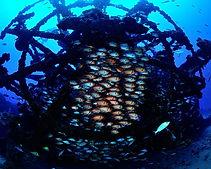galeria-aquaticos21.jpg
