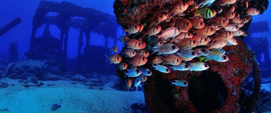 galeria-aquaticos16.jpg