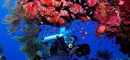 Diving-498x232.jpg