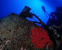 galeria-aquaticos9.jpg