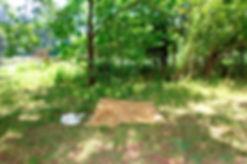 Eva Stenram, pornography/forest_pic_19,2012, Digital C-Type print, 11.8cm x 17.7cm