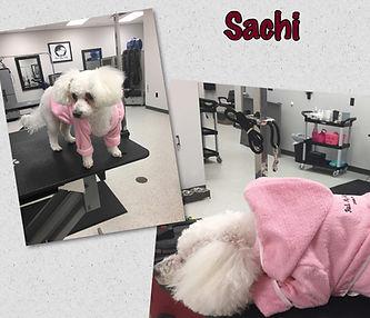 Rub My Belly Dog Salon