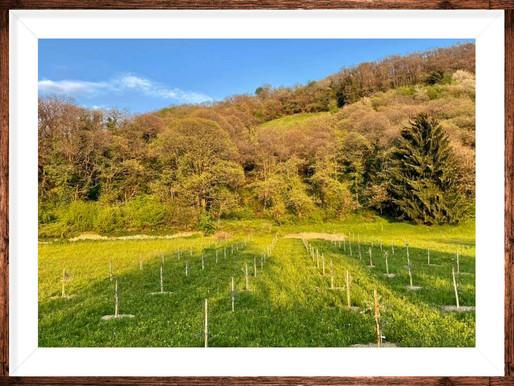 22 aprile,  Giornata mondiale della terra, la Terra Promessa è a Monte Isola