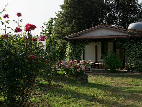 Annes vingård