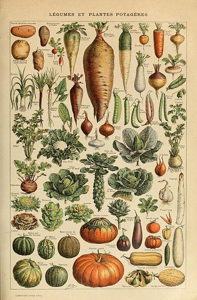 Adolphe_Millot_legume_et_plante_potagere